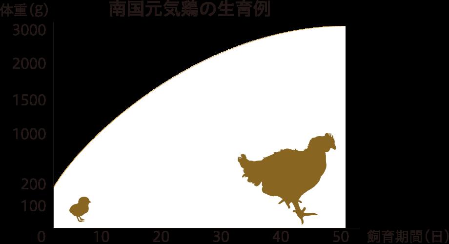 種鶏から育てる安心の生産方式